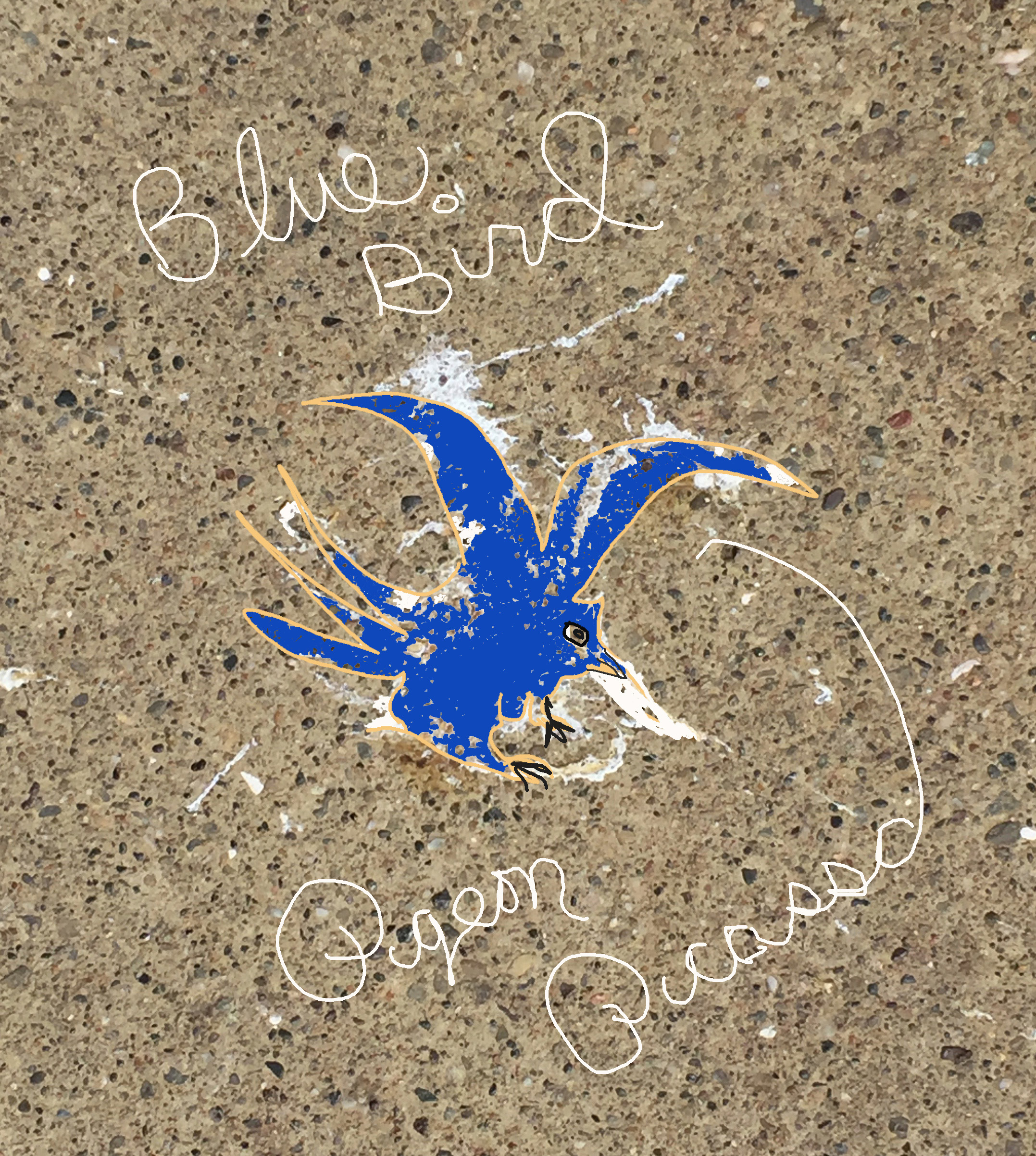 Pigeon Picasso bluebird